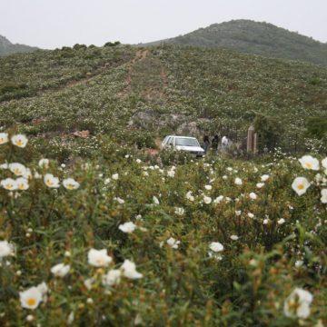Entorno-Jara-en-primavera1